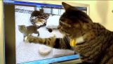 إحضار للخلف القطط!