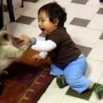 Γάτες εναντίον παιδιών