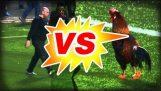 Κόκορας εναντίον σεκιουριτά
