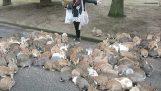 ウサギの侵入