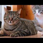 Δύο πολύ αστείες γάτες