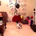Ο σκύλος και το μπαλόνι