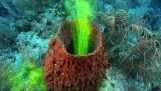 Sponges: The filters of the sea