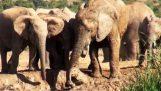 Elefantina は彼女の赤ちゃんを保存します。