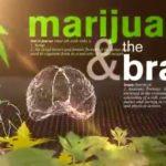 Το σώμα σου υπό την επήρεια μαριχουάνας