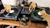 Τετράποδοι DJ