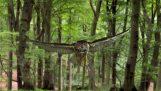 Merveilles cachées de la nature