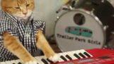 Возвращает мурлыкать пианист