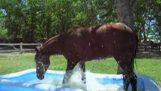 En hest oppdager Kiddie Pool