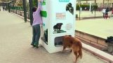 Recycling offering food to stray dogs