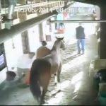 Το άλογο δολοφόνος καραδοκεί