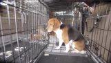 Кучета родени на затворници, издаден за първи път