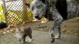 Pes se stará o kotě s postižením