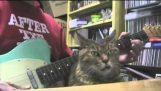 Cat hates guitar