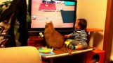 Cat and baby watch tv