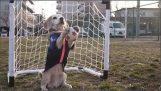 Ο σκύλος προετοιμάζεται για το παγκόσμιο κύπελλο