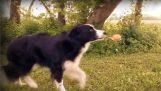 Τα απίθανα κόλπα ισορροπίας ενός σκύλου