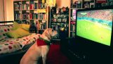 Σκύλος πανηγυρίζει το γκολ στο Μουντιάλ!
