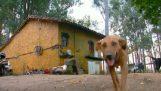 Este perro se moverá