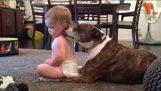 Le chien fait un bain de bébé