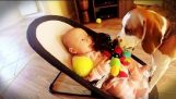 The dog apologizes to baby