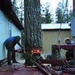 Κοπή τεράστιου δέντρου με απόλυτη ακρίβεια