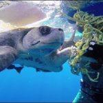 Δύτες διασώζουν μια θαλάσσια χελώνα