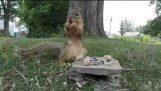 गिलहरी Humps GoPro