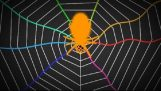 """העכבישים """"סלילה"""" האינטרנט כמו גיטרה"""