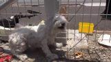 Спасителни бездомно куче, което живее на жп линии