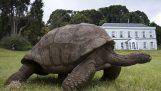 Η πιο ηλικιωμένη χελώνα στον κόσμο γίνεται 182 ετών