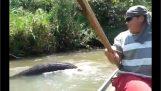 Obří Anakonda v řeka v Brazílii