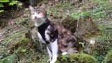 A blind cat makes hiking with her boss