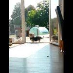 Ο σκύλος και η φανταστική κλειστή πόρτα