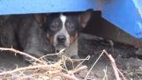 Ένας αδέσποτος σκύλος διασώζεται και υιοθετείται