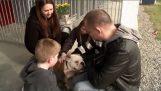 İçinde belgili tanımlık aile köpek güzel bir sürpriz