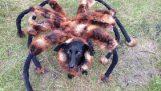 Шега: Огромен мутант паяк
