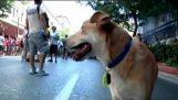 Salsiccia Loukanikos aka Luke, il cane di sommossa di Atene Grecia
