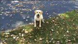 Detektor hund
