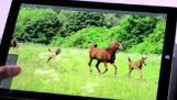 Budoucnost společnosti Adobe aplikací na tabletu