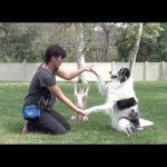 Τρεις ταλαντούχοι σκύλοι