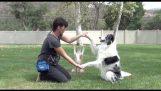 3 つの才能のある犬
