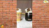 Funny Animal Compilation #5