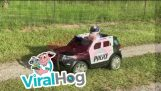 A speeding pig arrested by the police