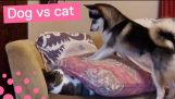 STAMPING DOG TRIES TO WAKE UP RESTING CAT