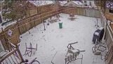 Dog Narrowly Escapes Falling Tree During Winter Storm
