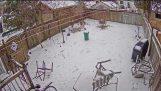 Pes tesne unikne Padajúce strom Počas Winter Storm