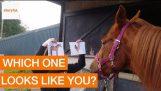 अपने चित्र को पहचान करने के लिए घोड़े ट्रेनर सिखाता है
