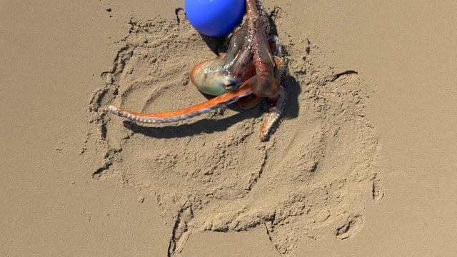Realistinen 3D kohtaus  mustekala leikkii pallo  9e429da7b8