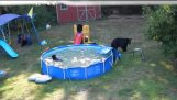 Bear family visits pool in New Jersey